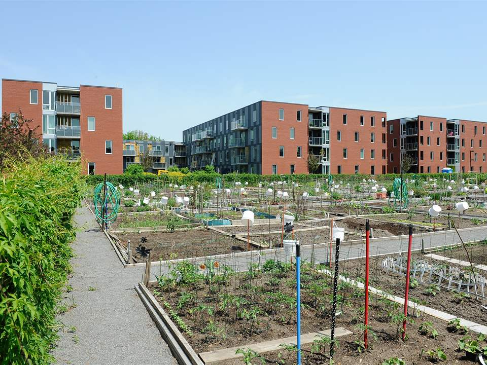 Project update 2011 - Greening the Infrastructure at Benny Farm, Montreal, Canada: The central …
