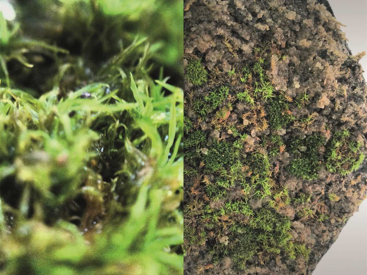 Project entry 2014 Europe – Bio Ceramic: Moss-grafted clay tiles for green roofs, Barcelona, Spain