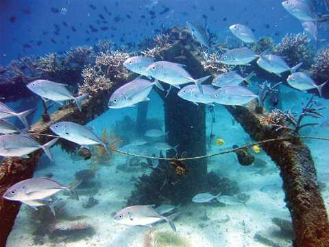 Project entry 2005 - Concrete Substrates for Accelerated Coral Restoration, Philippines: …
