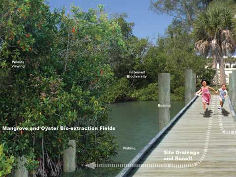 Shoring-up research on mangroves