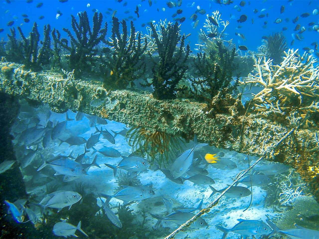 Project update November 2015 – Concrete Substrates for Accelerated Coral Restoration, …
